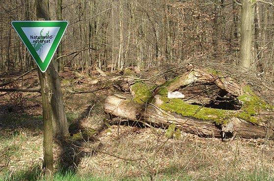 Waldknigge