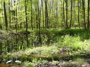 Kandler Stadtwald