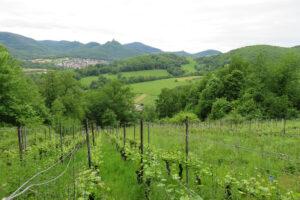 Weide Wein und Wald