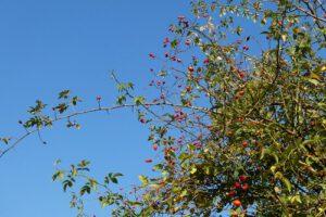 Die wilde Natur im Herbst